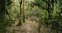 Hutan Mankira, Kafa, Ethiopia (Thomas Lewton/BBC Travel)