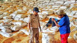 Dorong Ekspor, Kementan Buka Karantina Pertanian di Ampana