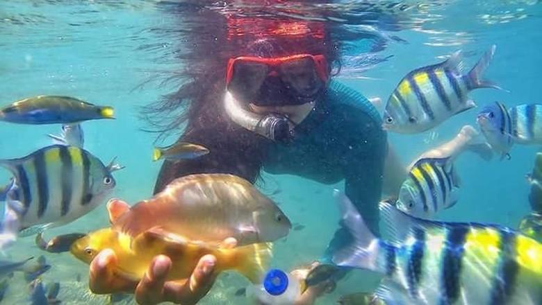 Traveler yang sedang bermain dengan ikan warna-warni (istimewa/Amink)
