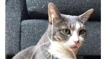 Seru-seruan di iOS 12: Ukur Kucing, Pamer Memoji