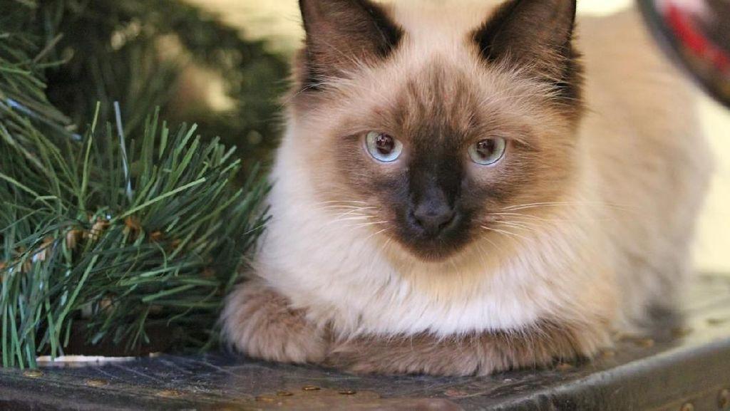 Wadidaw! Kucing Ini Ketakutan Lihat Wajah Pemiliknya