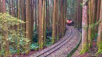Menembus jalur sempit di dalam hutan Alishan (Liao Yuan-chiao/CNN Travel)