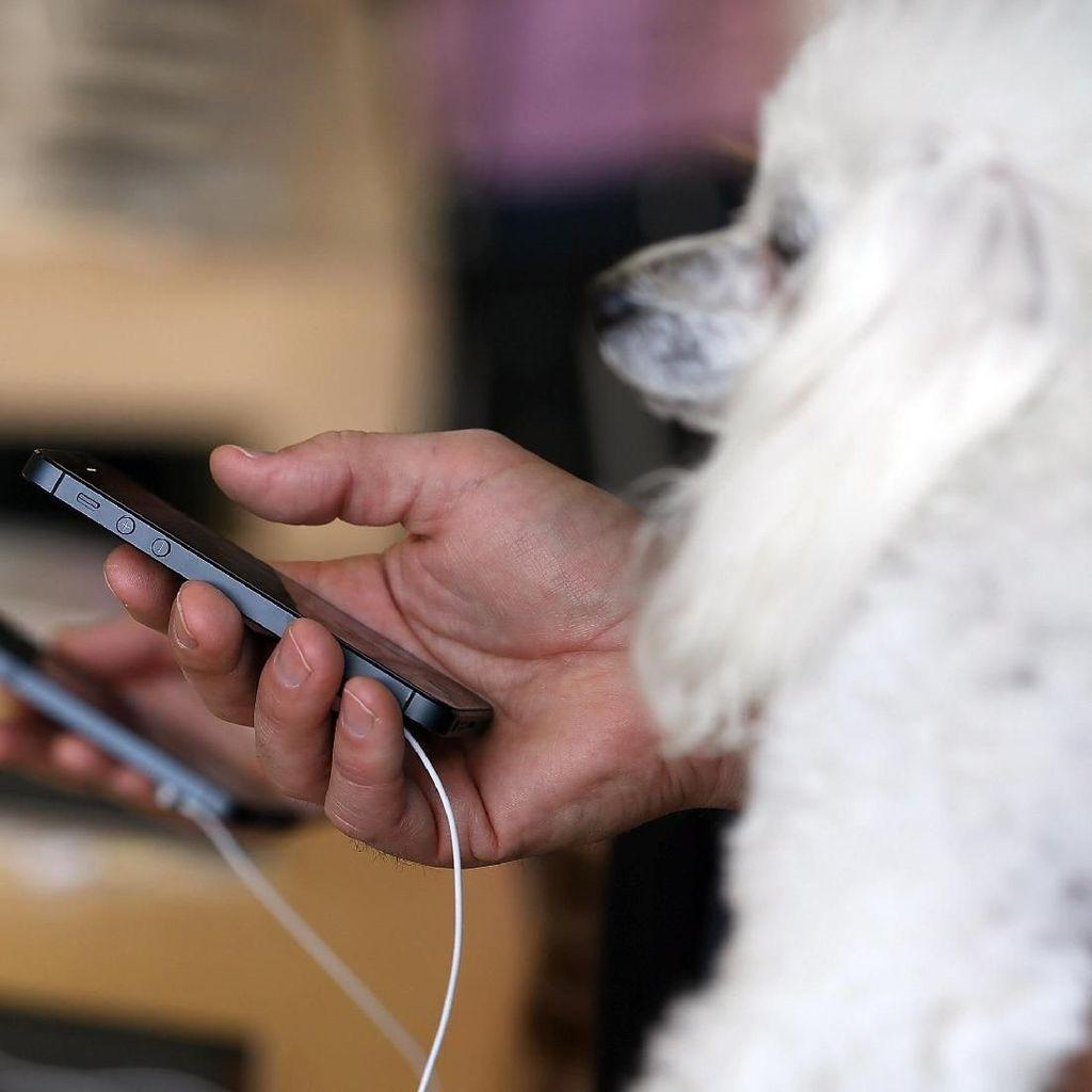 Awas! Gadget Bisa Bikin Hewan Peliharaan Cemburu dan Depresi