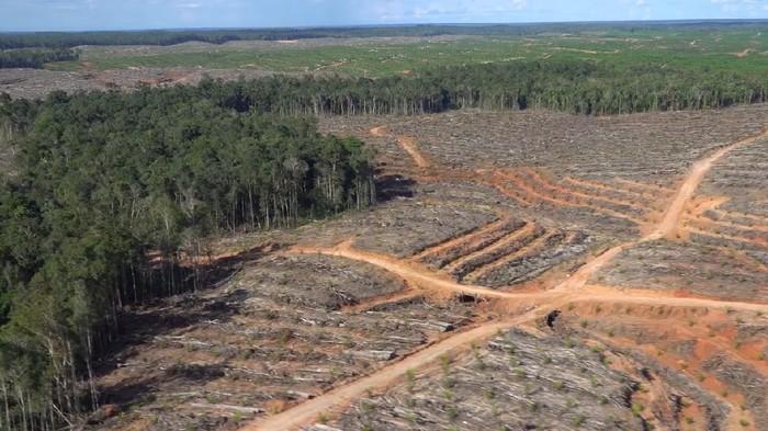 Hutan di Kalimantan dan Papua