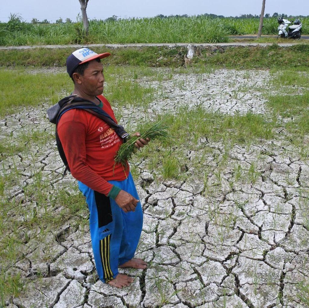 Kemarau Belum Berakhir, Sejumlah Daerah di Indonesia Krisis Air