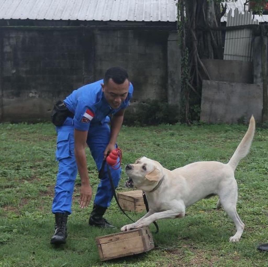 BNN Cari 74 CPNS untuk Jadi Pawang Anjing, Berminat?
