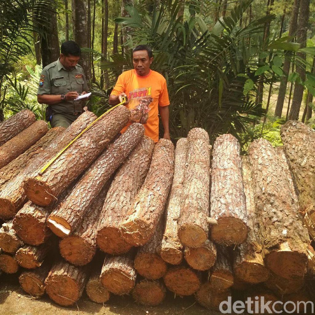 Pencurian Kayu di Hutan Trenggalek Digagalkan, Sayang Pelaku Kabur