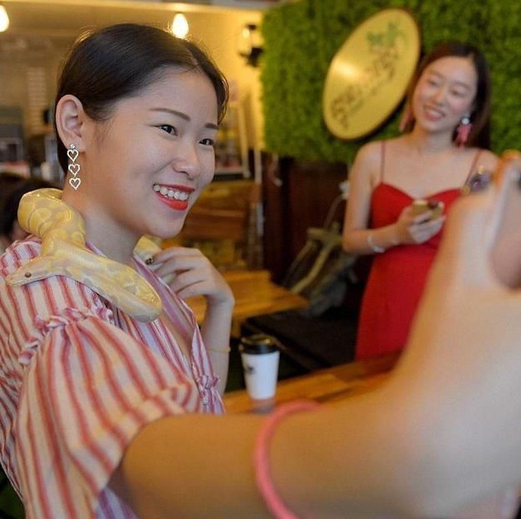 Foto: Selfie Bareng Ular & Kalajengking di Kafe Ini, Berani?