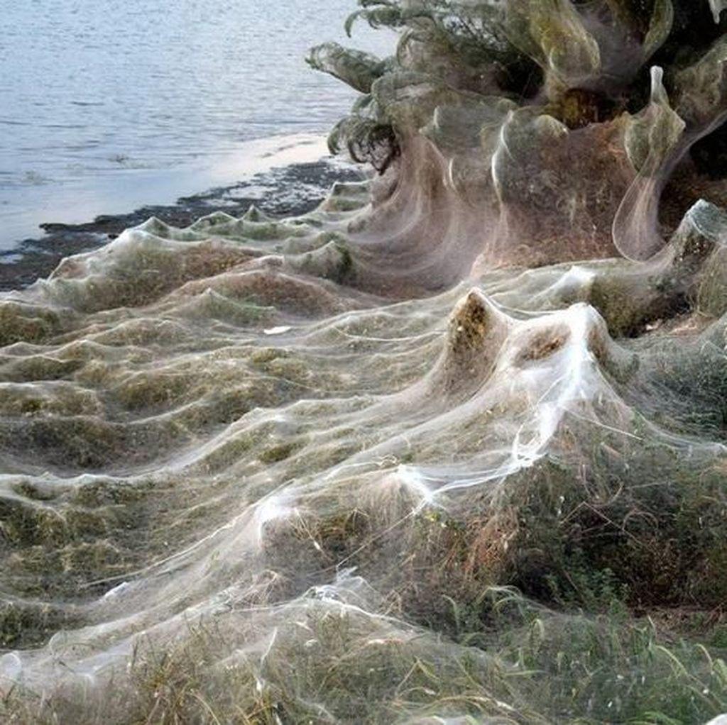 Kota di Yunani Diserbu Laba-laba yang Rentangkan Jaringnya 300 Meter