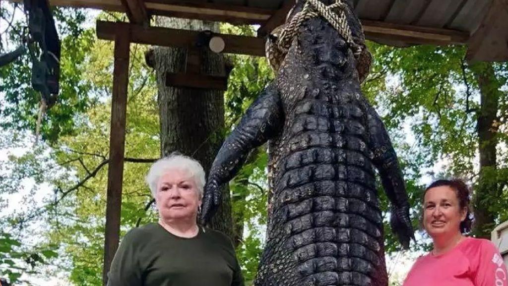 Nenek di AS Bunuh Aligator 263 Kg karena Makan Miniatur Kudanya
