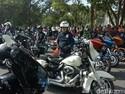 Ratusan Harley-DavidsonBuat SesakBanyuwangi
