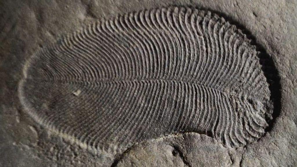 Laboratorium Australia Pastikan Temuan Fosil Hewan Pertama di Dunia
