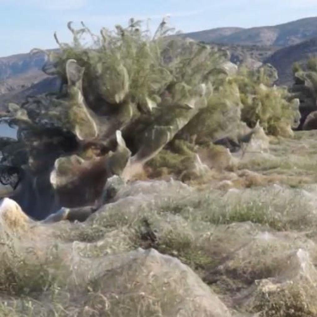 Potret Kota di Yunani yang Diselimuti Jaring Laba-laba 300 Meter