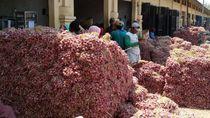 Harga Bawang Merah di Probolinggo Anjlok, Ini Penyebabnya