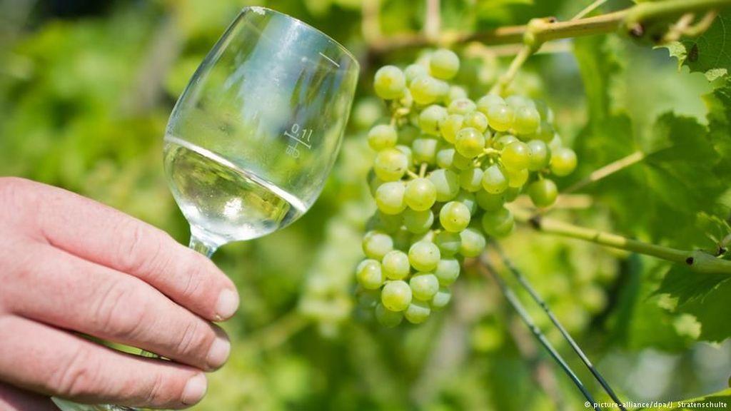 Petani Buah Anggur Jerman akan Panen Raya Tahun 2018
