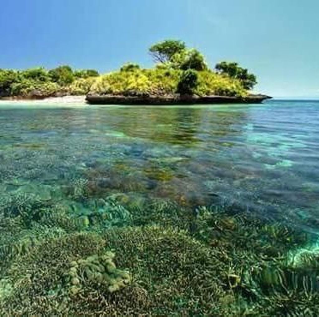 Tergoda Keindahan Bawah Laut Pantai Pink di Lombok Timur