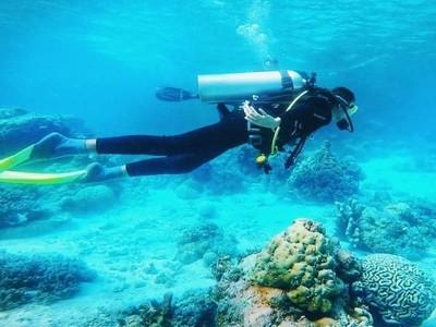 Surga Bawah Laut Wakatobi! Impian yang Jadi Nyata