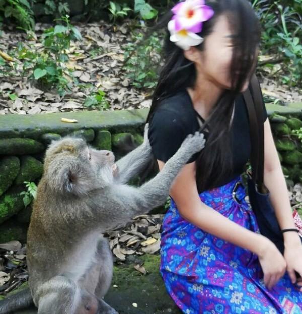 Terang saja, beberapa detik kemudian dia disambar monyet tersebut. Ada-ada saja... (harijisun/Instagram)