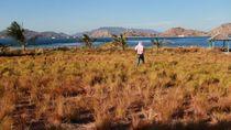 Bukan di Afrika, Ini di Pulau Kenawa NTB