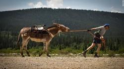 Kalau kamu sudah bosan ikut maraton yang begitu saja, coba daftar untuk ikut lomba pack burro racing. Syaratnya kamu harus punya keledai yang bisa diajak lari.
