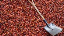 Larangan Sawit Uni Eropa Ancam Nasib Petani Kecil