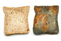 Apakah Roti dan Keju yang Sudah Berjamur Aman Dimakan?