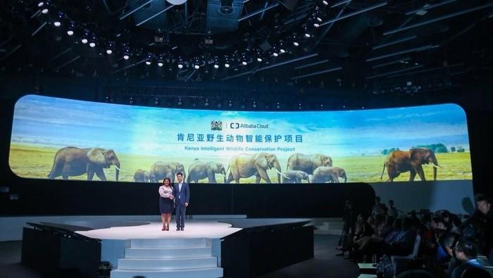 Teknologi canggih melindungi gajah yang diadopsi Jack Ma (Foto: Dok: Alibaba)