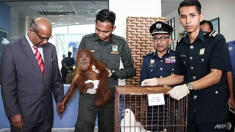 Malaysia Gagalkan Upaya Penyelundupan 400 Hewan, 3 WNI Ditangkap