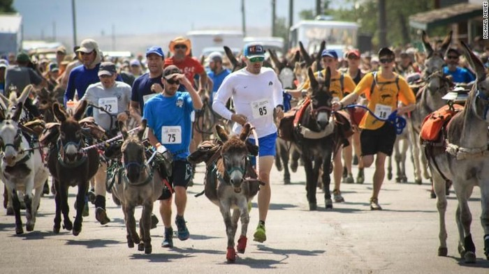Direktur burro racing Brad Wann menyebut bahwa acara ini diikuti oleh banyak peserta dari berbagai belahan dunia. (Foto: CNN)