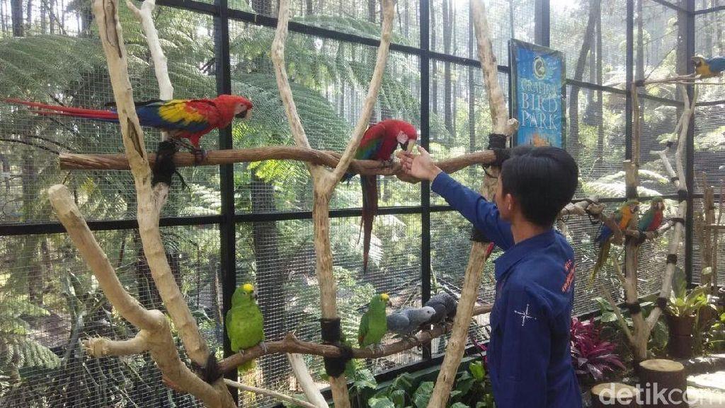 Baru Nih! Lembang Punya Taman Burung dari Luar Negeri