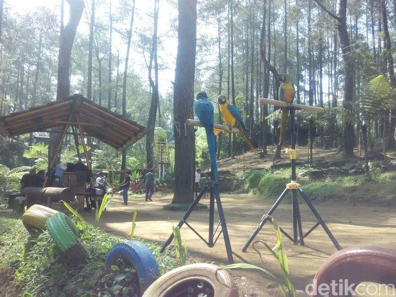 Inilah Terminal Wisata Grafika Cikole di Lembang, Kabupaten Bandung Barat. Ada wahana wisata baru yang diberi nama Grafika Bird Park (Rachmadi Rasyad/detikTravel)
