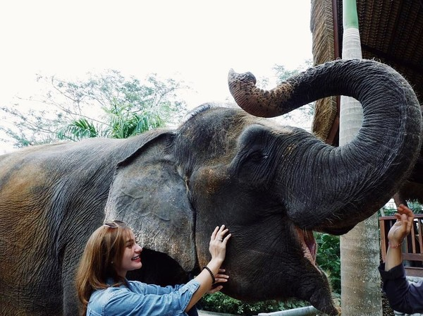 Tak hanya ke pantai, Nora yang punya darah blasteran Indonesia-Swiss ini juga terlihat asyik bercengkrama dengan seekor gajah di Bali Zoo. Gemas! (Instagram/@ncdpapl)
