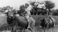 Nostalgia Potret Kehidupan Pedesaan Indonesia Tempo Dulu