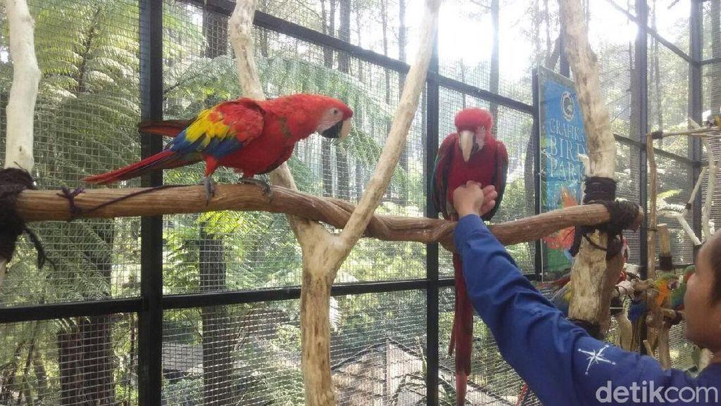 Foto: Asyik! Ada Taman Burung Macaw di Bandung