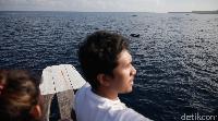 Sejauh mata memandang, banyak gerombolan lumba-lumba (Zaky Fauzi/detikTravel)