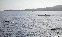 Lumba-lumba di perairan Wakatobi (Zaky Fauzi/detikTravel)