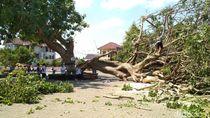 Pohon Gada Berusia 40 Tahun di Istana Gebang Blitar Roboh