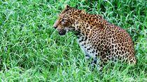 Heboh soal Harimau Sumatera, Ini Tips Menghindari Serangannya