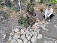 Ritual Nepus di Ciamis dan Mitos Memohon Jabatan