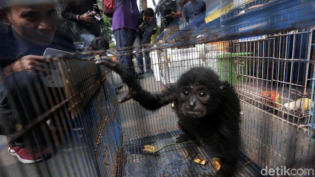 6 Upaya yang Dapat Dilakukan untuk Menjaga Kelestarian Fauna di Indonesia