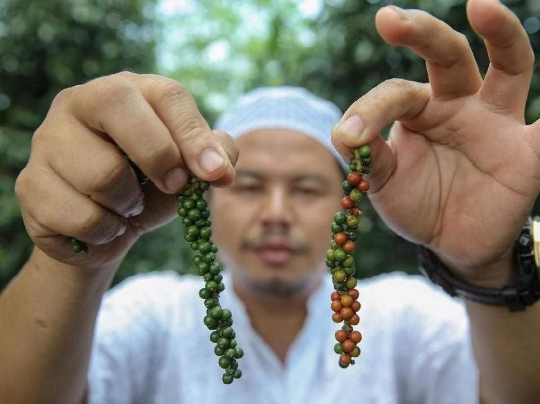 Ekspedisi APPSI Eksplorasi Kekayaan Bangka Belitung