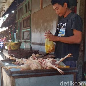 Harga Ayam Anjlok, Peternak Teriak