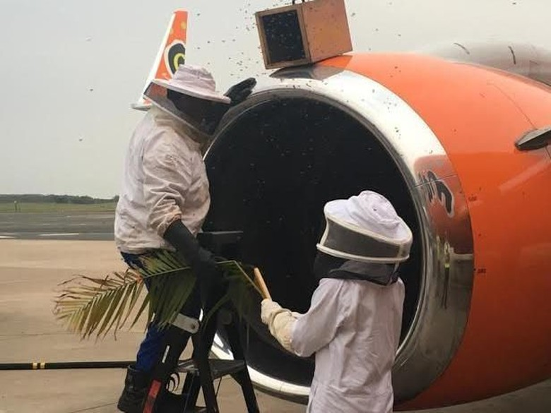 Serangan Lebah Tunda 3 Penerbangan di Afrika Selatan