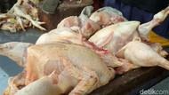 Duh, Harga Daging Ayam Tembus Rp 52.000/Ekor