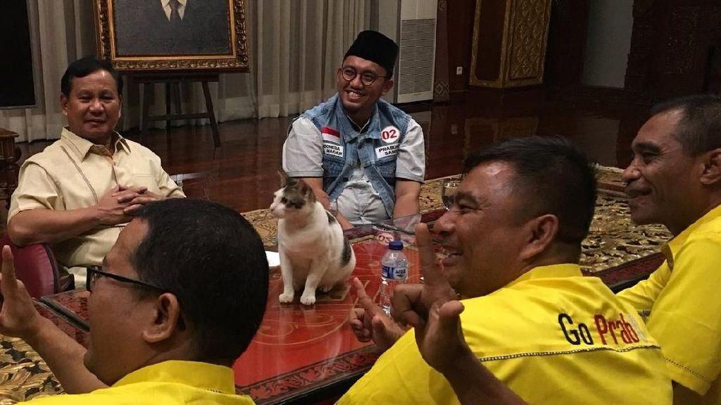 5 Manfaat Kesehatan Jadi Pecinta Kucing Seperti Prabowo Subianto