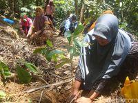 Desa Melung Juga Punya Kopi Legendaris Bercitarasa Unik