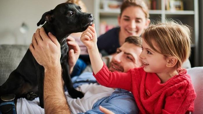 Hewan peliharaan sakit membuat kesehatan mental juga terdampak. Foto: Istock