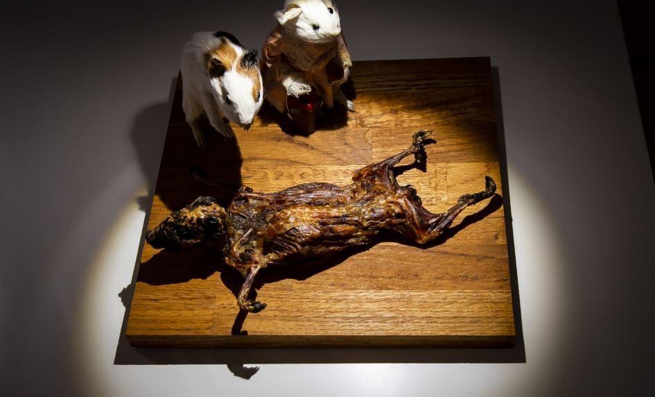 Museum Makanan Menjijikkan