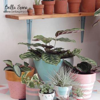 Kaktus Bella Spina