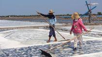 Harga Garam Turun Saat Musim Panen, Ini Kata Petani di Sidoarjo